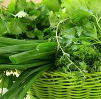 Зелень, Салаты, Пряные растения