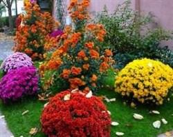 """Набор семян """"Многолетний роман"""". Цена 260 рублей. Цветы многолетние, 13 видов."""