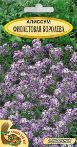 Алиссум ФИОЛЕТОВАЯ КОРОЛЕВА 0,2 грамма. Однолетник, фиолетовый, карликовый10-15 см