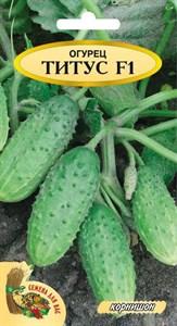 Огурец ТИТУС  F1, 1 грамм. Гибрид, среднеранний, пчелоопыляемый,  засолочный, корнишон,